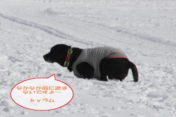 2011_02_06_0300.jpg