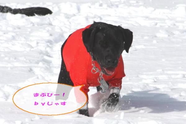 2011_02_06_0306.jpg