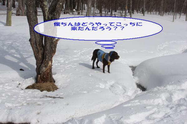 2011_02_06_0330.jpg