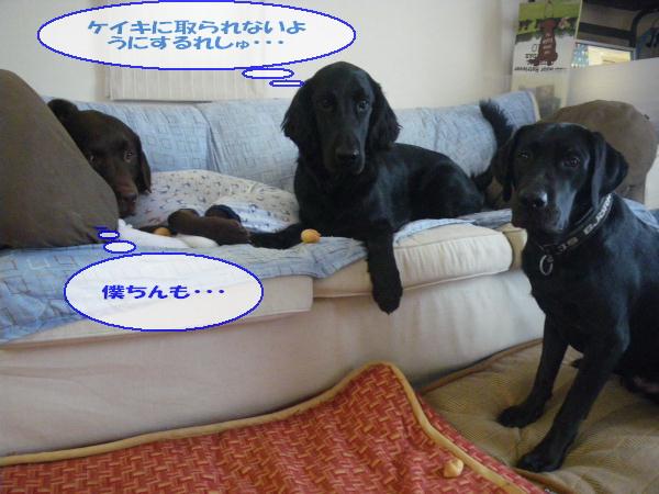 keoniBD2010_013.jpg