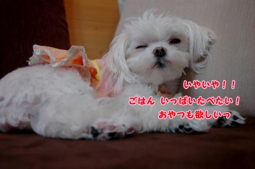 20100411D-006.jpg