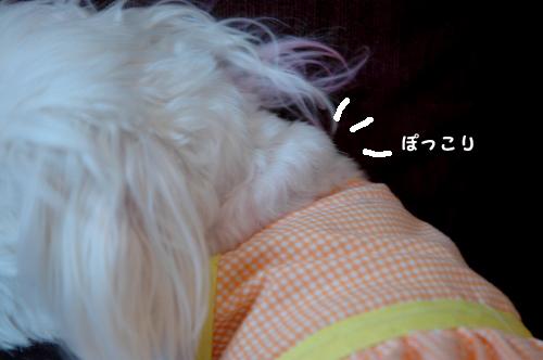 20100411D-009.jpg