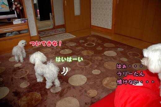 201004D19-005.jpg