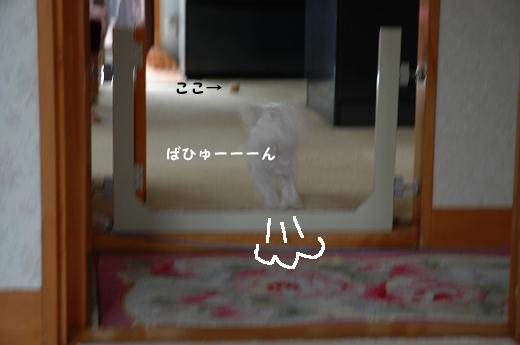 201004D19-053.jpg
