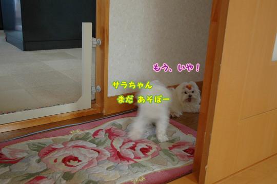 20100501D-192.jpg