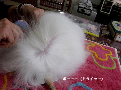 20100503-021.jpg