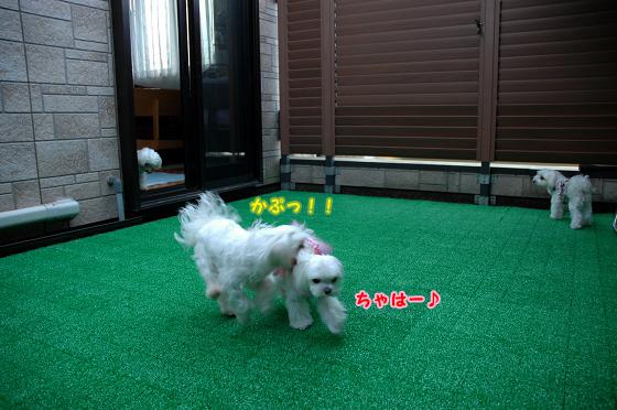 20100509D-006.jpg
