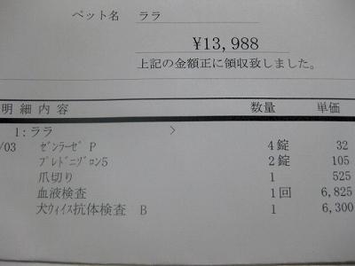 20110303-011.jpg