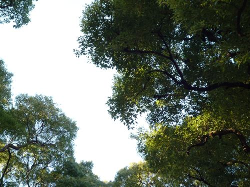 2010_0101_151828AA.jpg