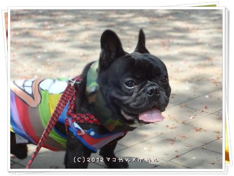 CHINOKO3NEN7.jpg