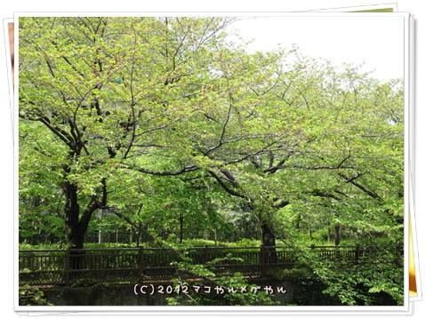 CHINOKO3NEN8.jpg