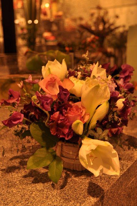 イクコの花