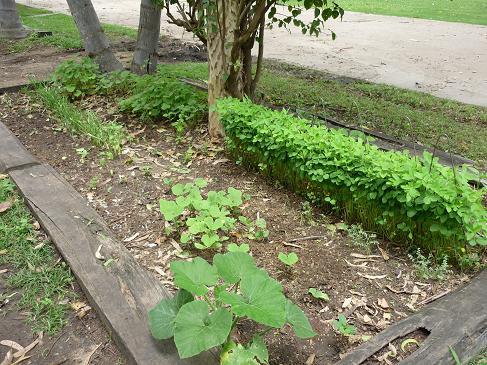 leighs garden