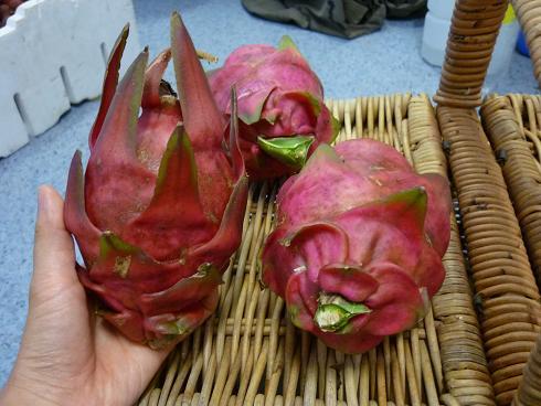 dragonfruits.jpg