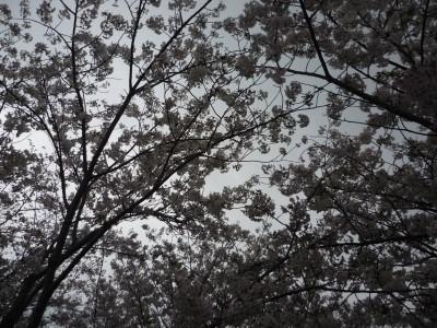 20100405_3.jpg