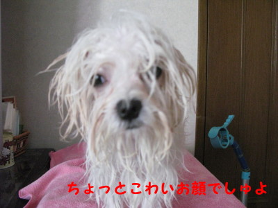 20101103_2_1.jpg