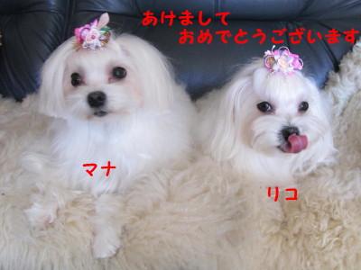 20110101_35_1.jpg