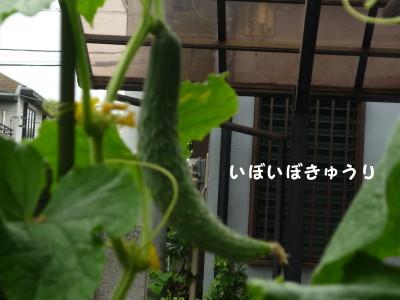 P1020341.jpg
