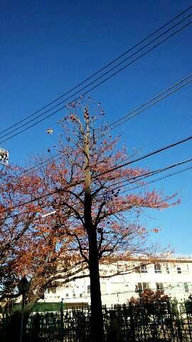 20131121桜.jpg