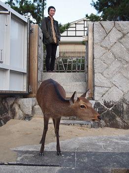 hatsukaichi27.jpg