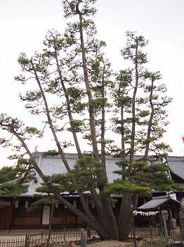 hatsukaichi58.jpg
