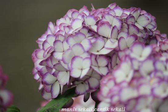 cantik1_20110614070913.jpg