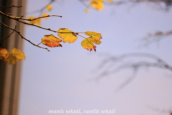 cantik1_20111229123542.jpg