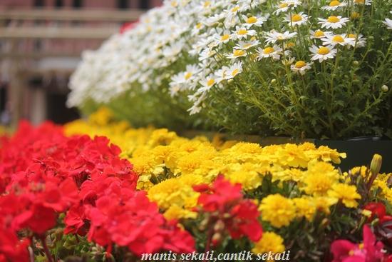 cantik2_20110509073245.jpg