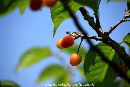 cantik2_20110526073404.jpg