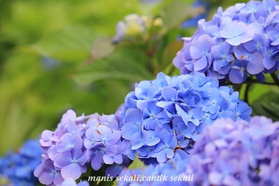 cantik3_20110610071942.jpg