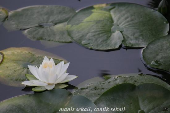 cantik3_20110812073719.jpg