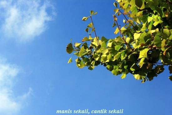 cantik3_20111126225844.jpg