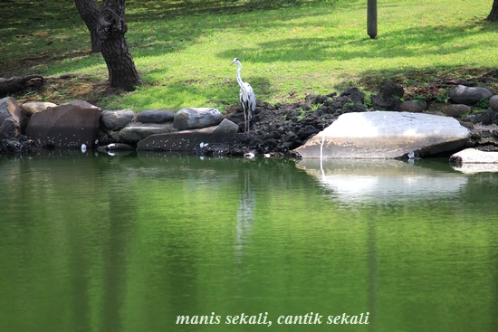 cantik4_20110819073612.jpg