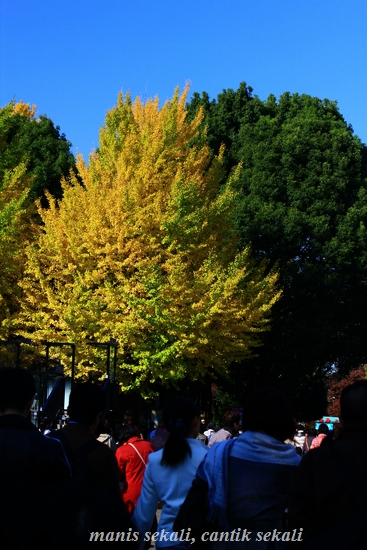 cantik4_20111124080846.jpg