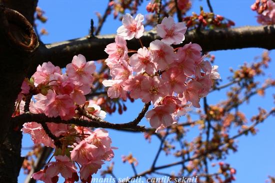 cantik4_20120327073633.jpg