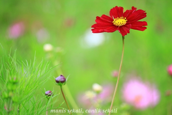 cantik5_20111011073417.jpg