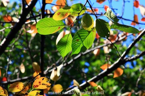 cantik5_20111124080846.jpg