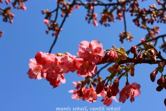 cantik5_20120327073633.jpg