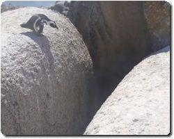 penguin leap of faith