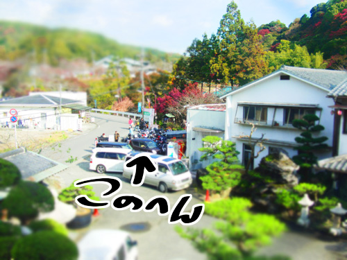 kouyou04