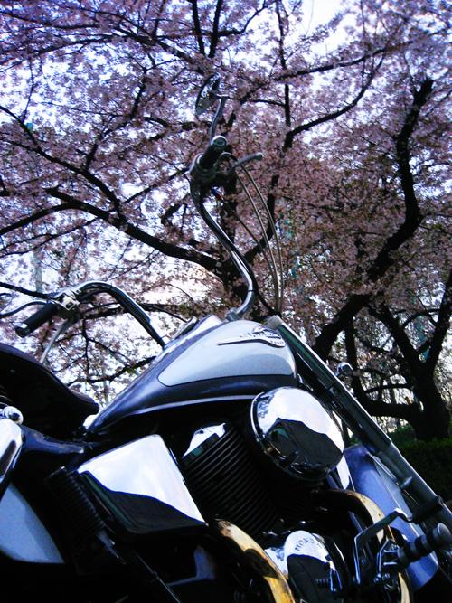 sakura_shadow1