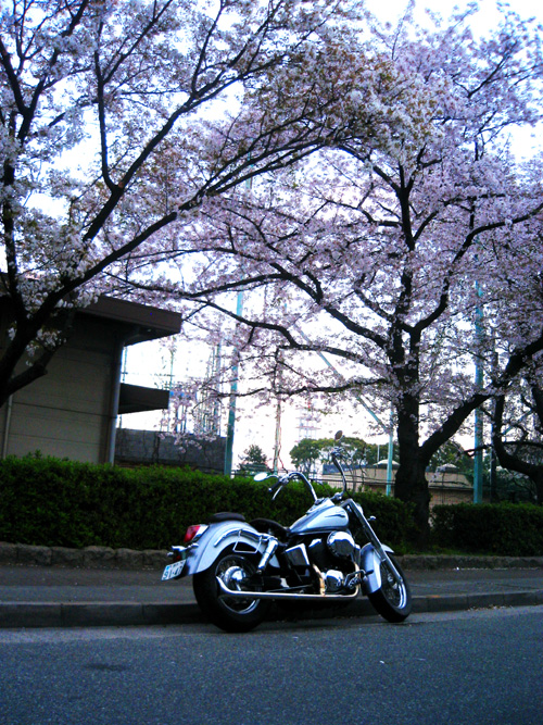 sakura_shadow2
