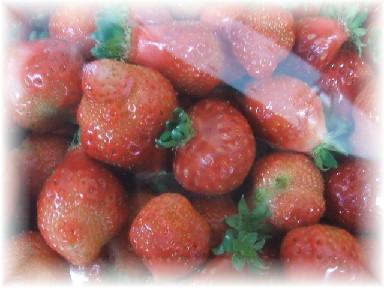 バラ苺-1