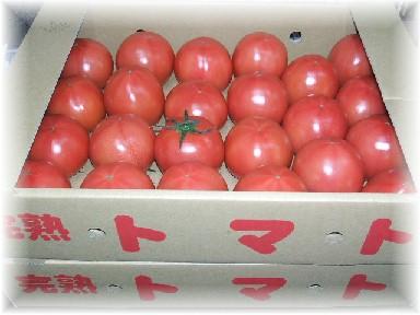 大川トマト