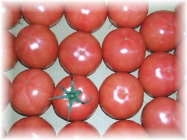 大川トマト-1