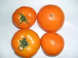 オレンジとまと-1