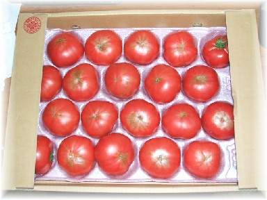 旨いトマト