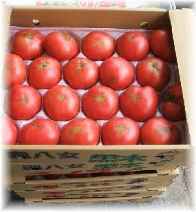 箱トマト-2