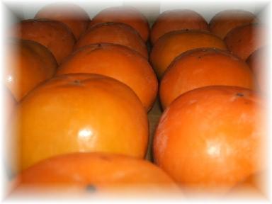 西村柿-1