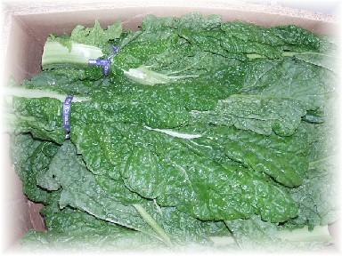 地野菜-2